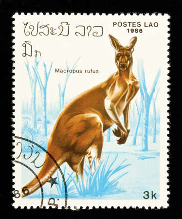 philately: LAOS - circa 1986:stamp features a kangaroo (Macropus rufus), circa 1986 in the Lao Peoples Democratic Republic. Stock Photo