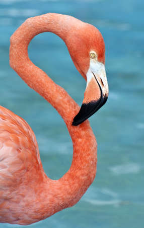 Fresh image of a pink flamingo.
