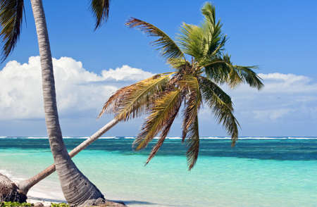Fresh high resolution image of palm trees on a caribbean beach.