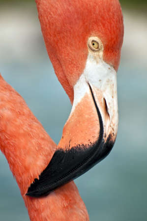 Close up image of a pink flamingo. Stock Photo - 8765167