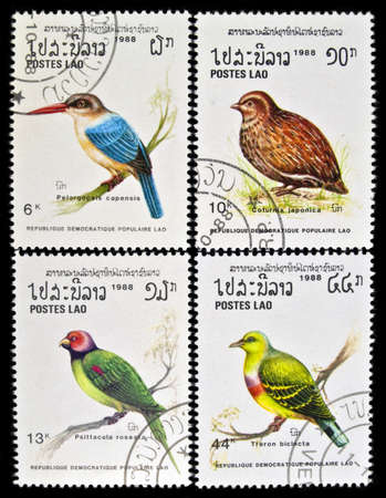 japanese quail: LAOS - circa 1988:stamps collection features a Stork-billed kingfisher bird  (pelargopsis capensis), a Japanese Quail bird (Coturnix japonica), a Blossom-headed  Parakeet bird (Psittacula roseata), and an Orange-breasted Green Pigeon (Treron  Bicincta), c