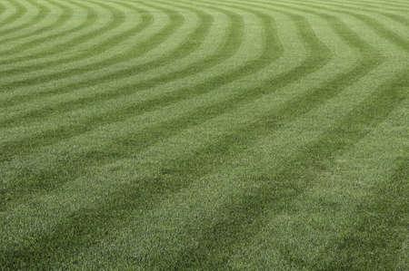 cut grass: Green grass with a stripped pattern cut. Stock Photo