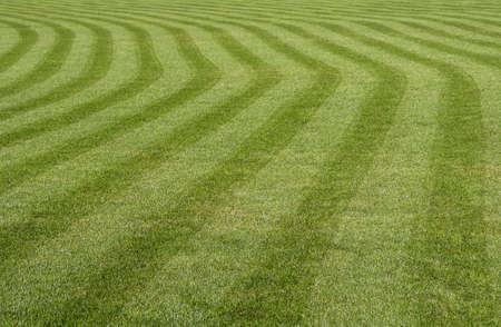 Green grass with a stripped pattern cut  Stock Photo