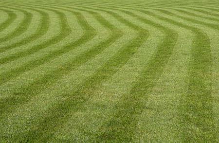 cut grass: Green grass with a stripped pattern cut  Stock Photo