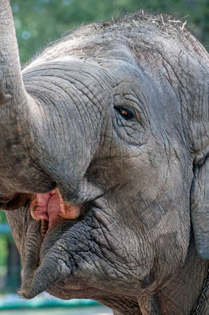 Close up image of an elephant face.