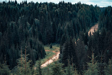 Mountain road, passing in a coniferous forest Banco de Imagens