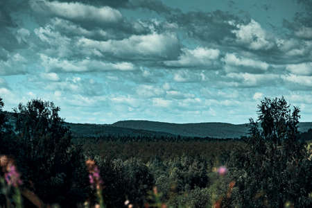 Endless expanses of coniferous forests stretching beyond the horizon