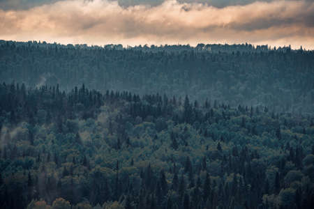 Mountain forest in fog with low-flying cumulus clouds