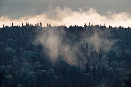 Mist rises over the forest in cloudy weather. Banco de Imagens