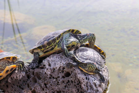 Turtles Stockfoto