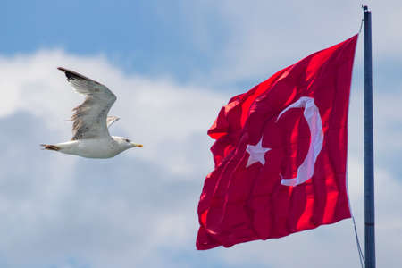 Turkish flag waving in the sky and seagull