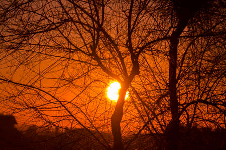 Sunset behind the tree branches from the capital of Spain, Madrid. Foto de archivo