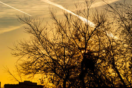 The sunset where the sun hides behind the branches of the trees on a totally clear day seeing some contrails from the planes. Orange sky in Madrid, Spain- Horizontal photography