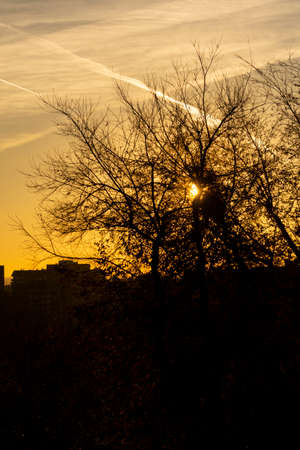 The sunset where the sun hides behind the branches of the trees on a totally clear day seeing some contrails from the planes. Orange sky in Madrid, Spain. Vertical photography