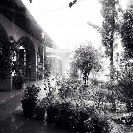 Raining Day in the Forest  Reklamní fotografie