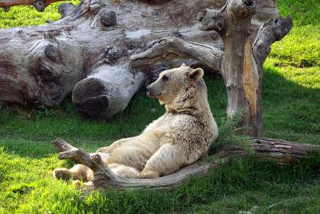 bear sit on armchair Stock Photo