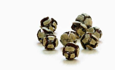 pine cones on white floor