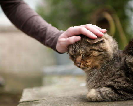 womens hand gently stroking domestic cat's head shallow depth of field