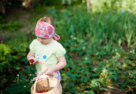fruitage: Little cute girl in a garden picking up fresh strawberry shallow depth of field focus on strawberry