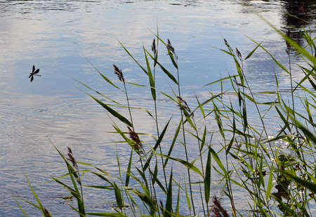 Grass in the water and one dragonfly