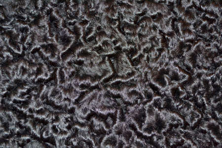 Closeup karakul fur texture to background Stock Photo