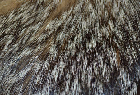 Closeup wolf fur texture to background Stock Photo