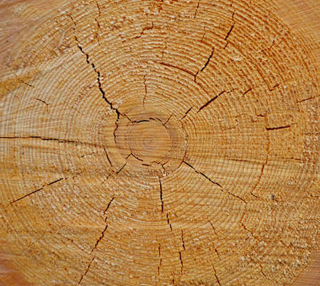Wooden texture as a background