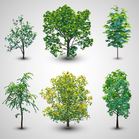 Realistic Tree Set with Sunlight Set 2   EPS10 Vector Vector