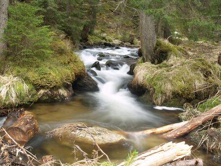 beautiful water stream in Carpathians photo