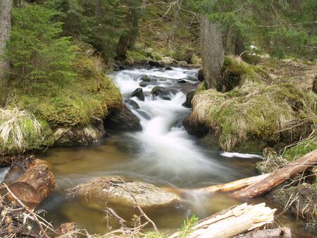 beautiful water stream in Carpathians Stock Photo - 10099600
