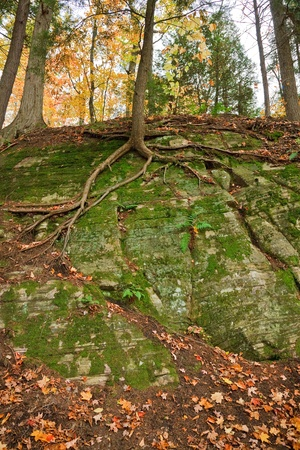 Tree roots over a huge rock in the forest, early fall Banco de Imagens
