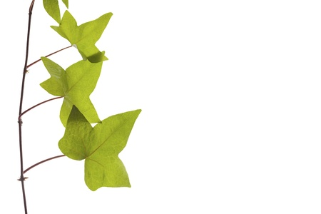 branch of green leaves on natural texture Stock Photo - 18160197