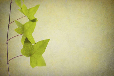 branch of green leaves on natural texture Stock Photo