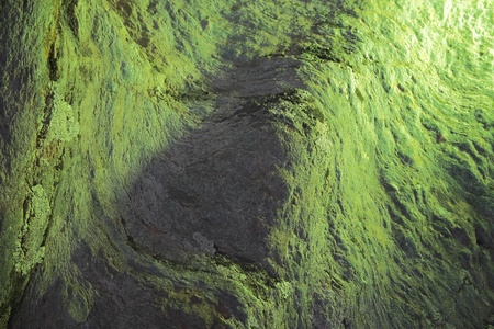 Degraded natural texture of green and gray