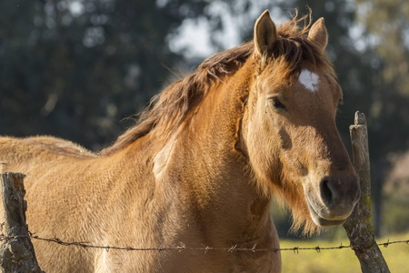 negoro: brown horse in a field of wild
