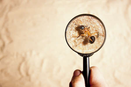 person looking an ant with a magnifying glass photo