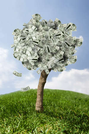 money tree: photo of money tree made of dollars