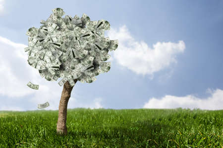 hundred dollar bill: photo of money tree made of dollars
