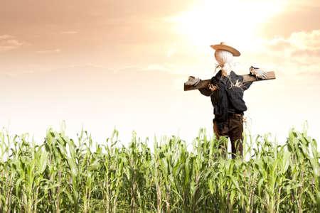 espantapajaros: foto de espantapájaros en el campo de maíz a la salida del sol Foto de archivo