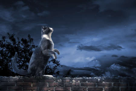 starry night: photo of a cat looking at the sky