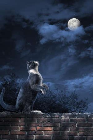 noche y luna: foto de un gato mirando a la luna Foto de archivo