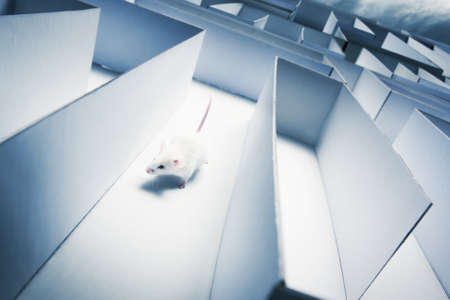 mouse trap: mouse running inside a maze Stock Photo