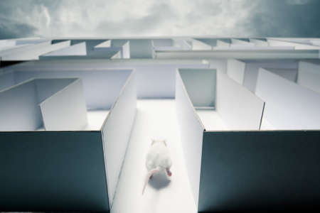 animal trap: mouse running inside a maze Stock Photo
