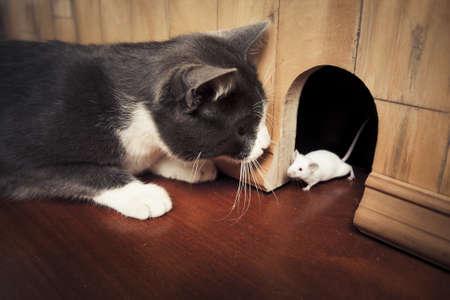 myszy: mała mysz wychodzi z jego otworu