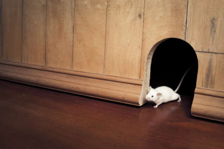 little mouse coming out of it's hole Stock Photo - 12792900