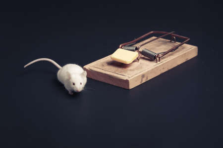 exterminate: mouse in danger near a mousetrap
