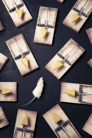 mouse in danger surrounded by mouse traps Stock Photo - 12792893