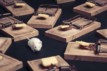 rat�n: del rat�n en peligro rodeada de trampas para ratones Foto de archivo
