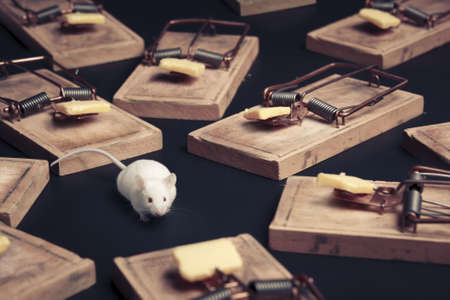 mouse in danger surrounded by mouse traps Stock Photo - 12791330