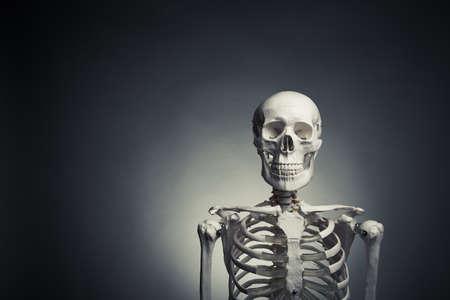 medical skeleton model with dramatic light Stock Photo - 15374479